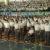Educação, o primeiro 'front' da guerra cultural do Governo Bolsonaro